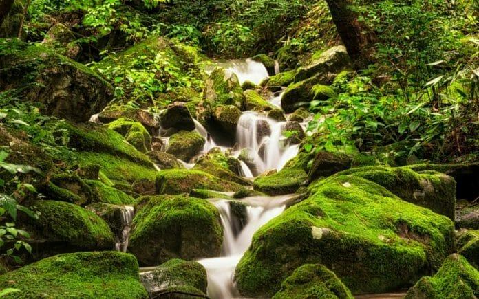 Pequeno Riacho Na Floresta De Musgos Em Wanju. Imagem: Shutterstock