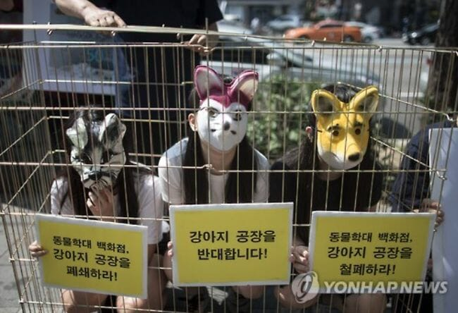 """Os Membros Da Associação Coreana De Proteção Aos Animais Se Manifestaram Em Hongdae, Seul, Exigindo O Fechamento Da """"Indústria Canina"""". (Imagem: Yonhap)"""