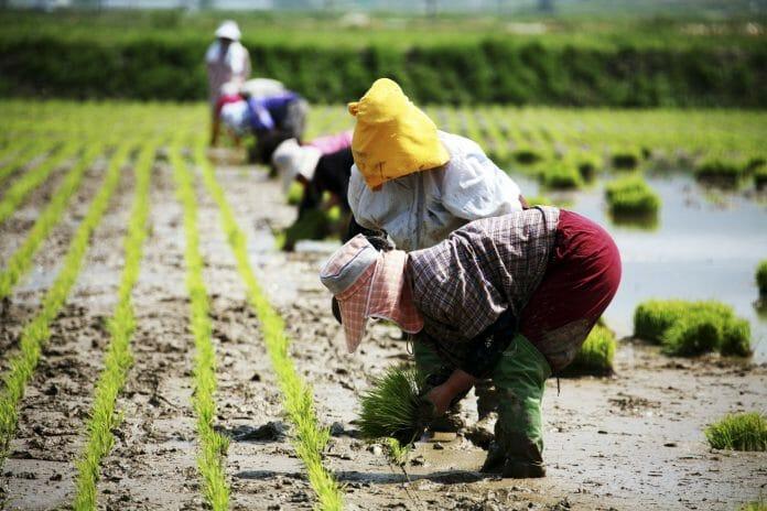 O Novo Sistema De Emprego Sazonais Começou No Início Deste Ano Como Parte Dos Esforços Do Governo Para Revitalizar A Economia Estagnada E Para Adquirir O Pessoal Necessário Nas Indústrias Agrícolas Que Requerem Mais Mão De Obra. (Imagem: Kobizmedia/ Korea Bizwire)