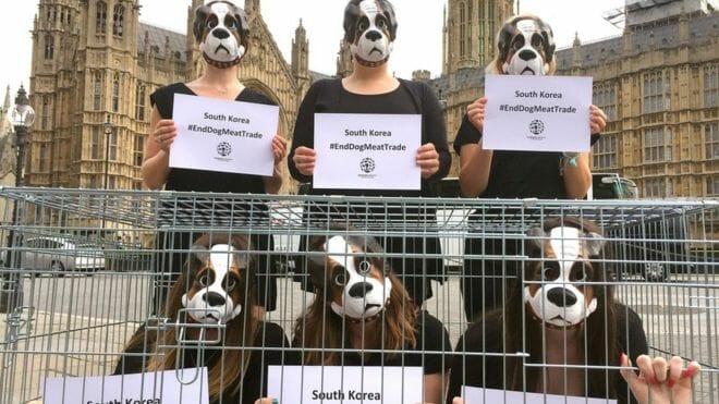 Ativistas Defensores De Animas Em Frente A Casa Do Parlamento Inglês.