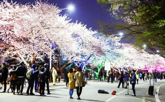 Festival 4 - Yeouido