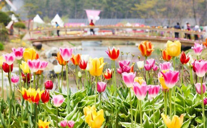 Festival 8 - Taean