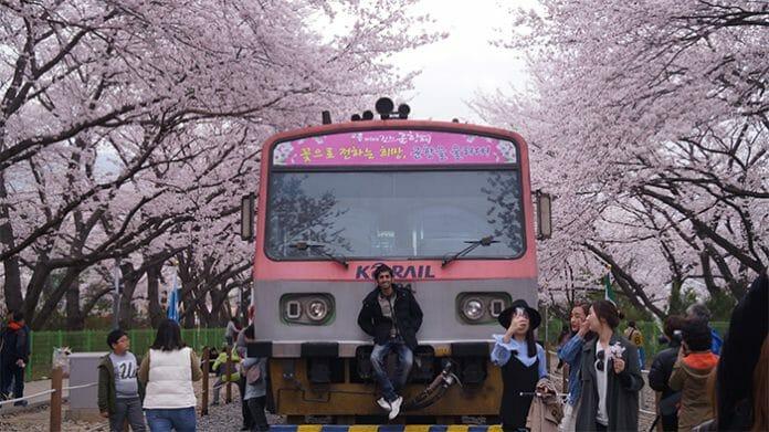 170321_Cherry Blossom25_In