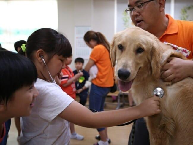 Uma Escola Primária Na Província De Gyeonggi Realizou Uma Aula Especial Na Terça-Feira, Durante A Qual Os Alunos Receberam O Valor Da Vida Interagindo Com Cães Sob A Supervisão De Especialistas Em Animais. Foto: Yonhap