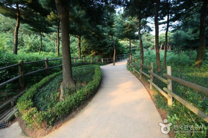 Jardim Botânico Namsan. Foto: Visit Korea/Korea Tourism Organization.