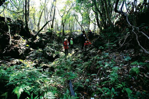 Uma Floresta Gotjawal / Fonte: Jeju Weekly