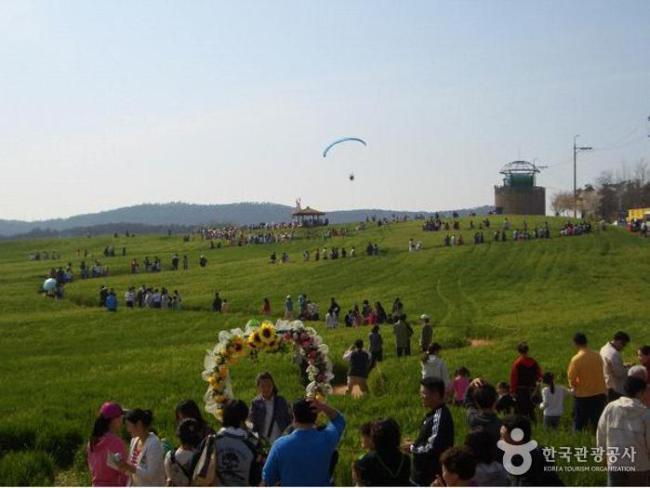 Campo De Cevada Em Gochang. Foto: Korea Tourism Organization