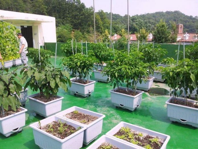 Plantação No Telhado, Em Seodaemun-Gu, Seul. Foto: Koreatimes