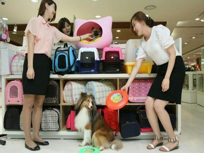 Como Filhos, Porém Mais Baratos, Sul Coreanos Optam Por Animais De Estimação