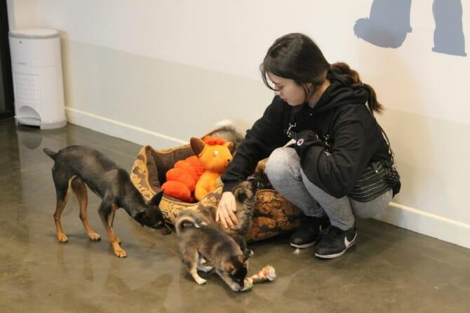 Governo De Seul Dará Vale Presente Para Quem Adotar Animais Abandonados
