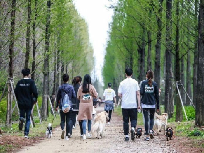 &Quot;Maratona Canina&Quot; Conscientiza A População Em Prol De Animais De Estimação