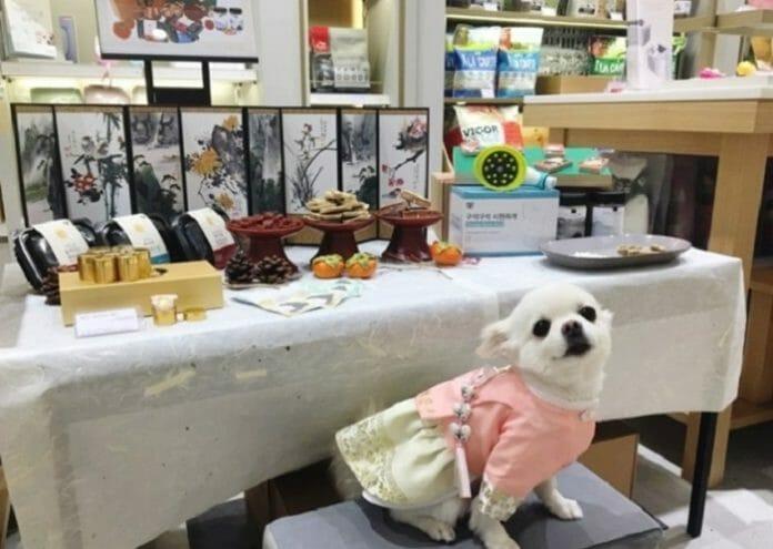 Cresce A Demanda De Hanbok Personalizado Para Pets