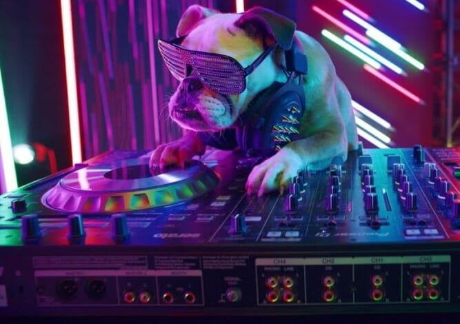 Propaganda Da Marca Lg Em Que Cachorro E Gato Competem Em Uma Batalha De Rap Vira Viral No Youtube