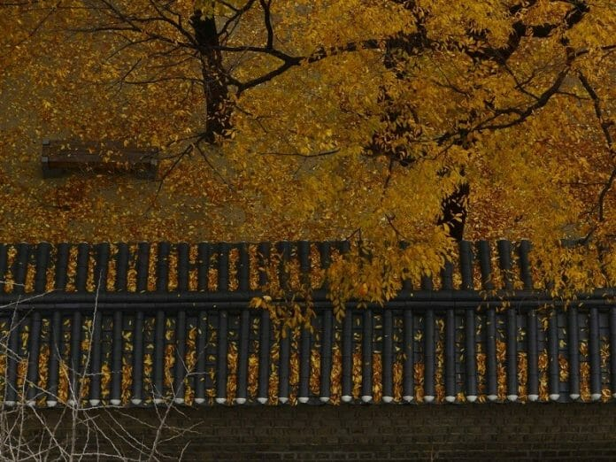 O Outono É Lindo, Também Na Coreia Do Sul