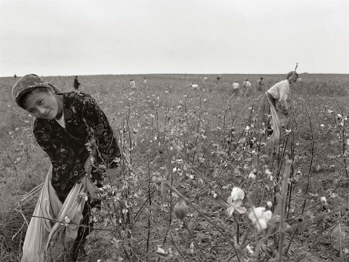 'Diáspora Coreana' - Sobreviventes De Xenofobia E Crimes De Ódio Capturados Em Fotos
